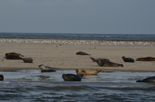 2012 Holidays  Waddenzee